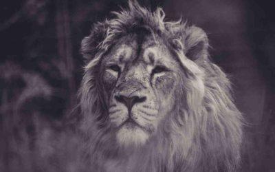 Ich schenke dir mein Löwenherz