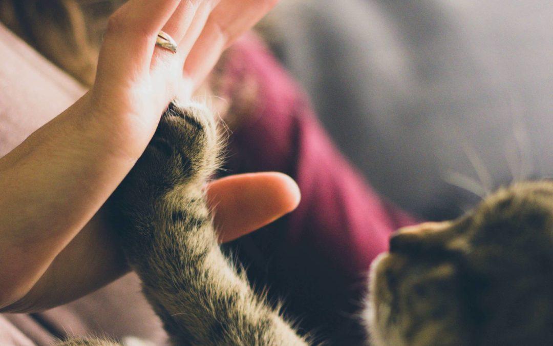 Von Katzenjammer & Seelenfrieden  – Wie Gott mir sein Wesen zeigt